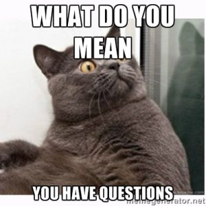 cat meme - what do you mean, you have questions?