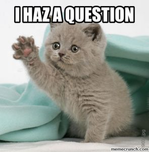 cat meme - I haz question